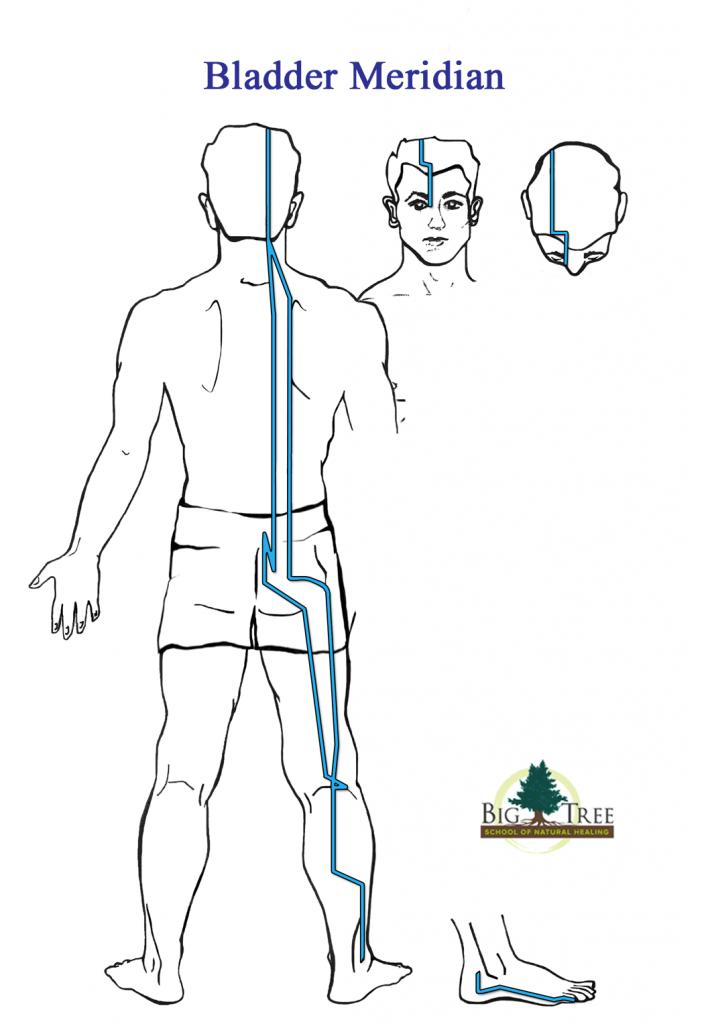 Bladder meridian diagram
