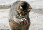 Cat_Cube