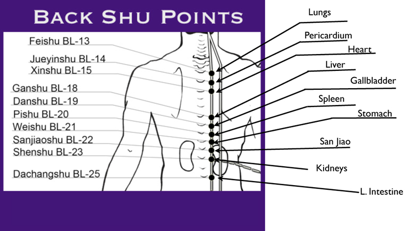 ... Free Report, including a full diagram on the Back Shu Points