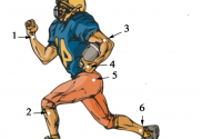 Points on football player locate acupoints