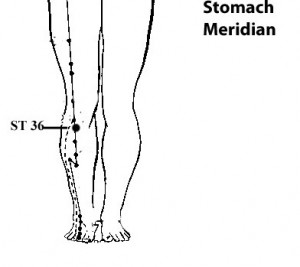 Stomach_Merid_Leg_Only