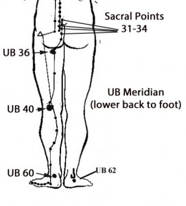 Urinary Bladder Meridian