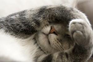 Overwhelmed cat