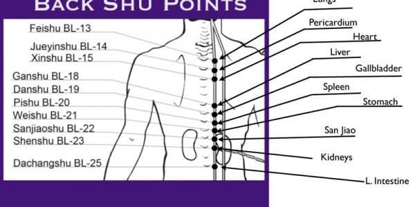 Back Shu Points diagram