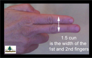 1.5 cun measured with first two fingers