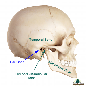 image of Temporal Mandibular Joint
