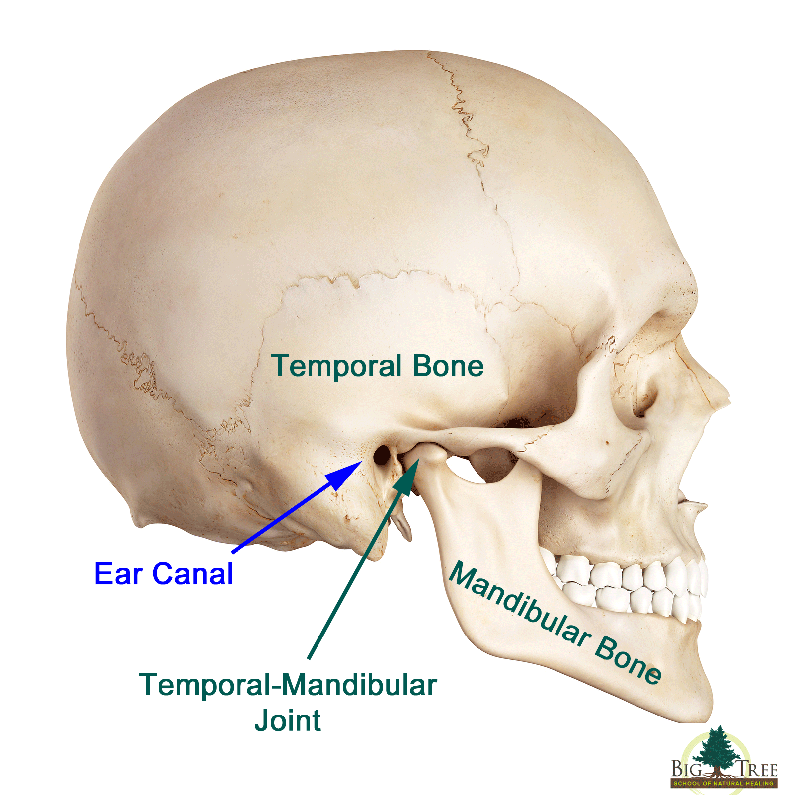 Expert TMJ Treatment -