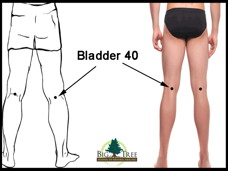 Bladder 40 clear diagram for low back pain