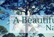 Take a beautiful nap next to a Big Tree.