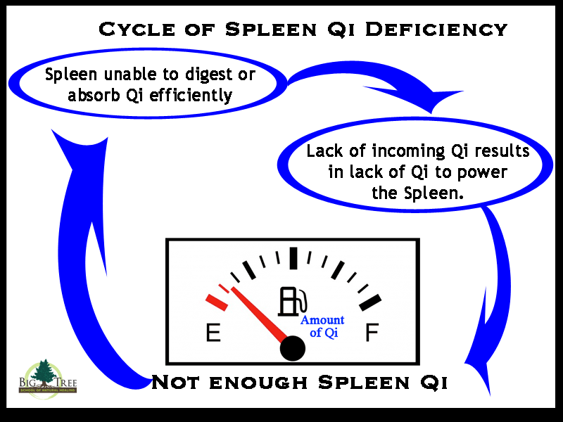 The cycle of Spleen Qi Deficiency