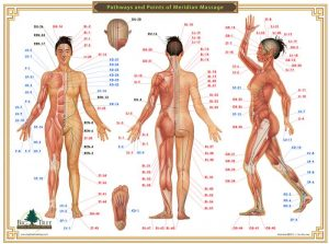 Acupressure chart pathways and points of meridian massage