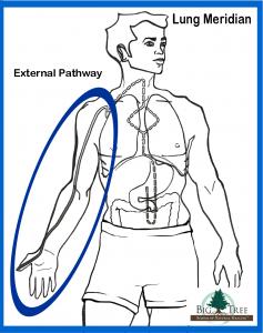 External Lung Meridian Pathway
