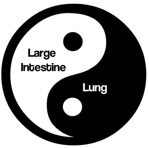 Lungs and Large Intestine Yin and Yang Pair